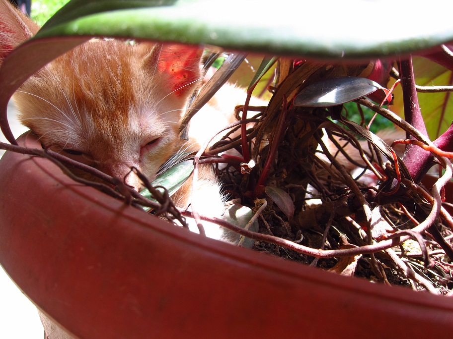 The Whiny Ball of Fluffy Fur and his favorite potted plant